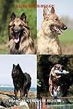 le berger belge les chiens de race t 3