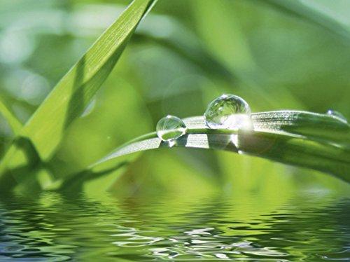 elbstklebend aus Vliesstoff oder Vinyl-Folie Foxy_A Grüner Hintergrund mit Gras Botanik Gräser Fotografie Grün D1JG (Gras Fotografie-hintergrund)