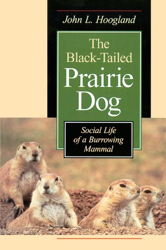 The Black-Tailed Prairie Dog: Social Life of a Burrowing Mammal (Wildlife Behavior and Ecology) - Black-tailed Prairie Dog