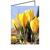 Frühlingskarten Blume 10er-Pack Grußkarte Geburtstag Frühling DIN A6 - faltbare Geburtstagskarte Klappkarte Krokusse