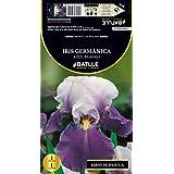 Semillas Batlle 076887Bols - Bulbo Iris Germánica Azul-Blanco