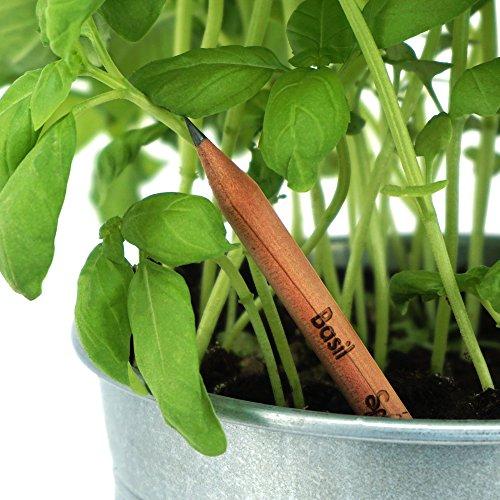 prezzo Sprout matite colorate da piantare   set di 6 matite colorate e due matite di grafite matite di legno naturale biologico e senza piombo