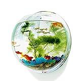 LittleDi Fischglas, kugelförmig, aus transparentem Acryl, Wandmontage, geeignet für Goldfische und Kampffische, Vase, Heim-Deko