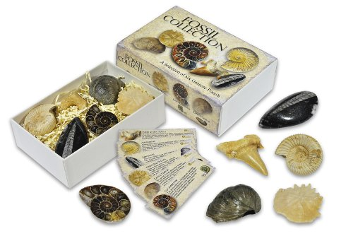 fossil-collection-box