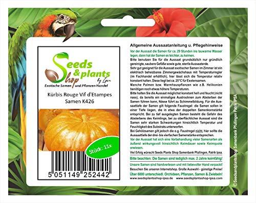 Stk - 11x Kürbis Rouge Vif d'Etampes - Kürbis Samen Gemüse Garten Pflanze K426 - Seeds Plants Shop Samenbank Pfullingen Patrik Ipsa