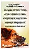 Die Weisheit alter Hunde: Gelassen sein, erkennen, was wirklich zählt – Was wir von grauen Schnauzen über das Leben lernen können - 2