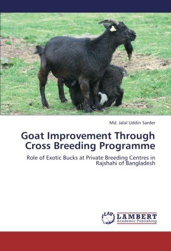Goat Improvement Through Cross Breeding Programme