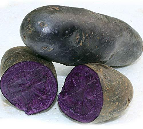 Bloom Green Co. Bonsai de pommes de terre rare Chine Haute Nutrition NON OGM Violet Pommes de terre Fruits et légumes Bonsai pour la maison Pots Planters cadeau 100 Pcs