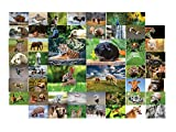Tiere Postkarten - 50 verschiedene Tierpostkarten-set