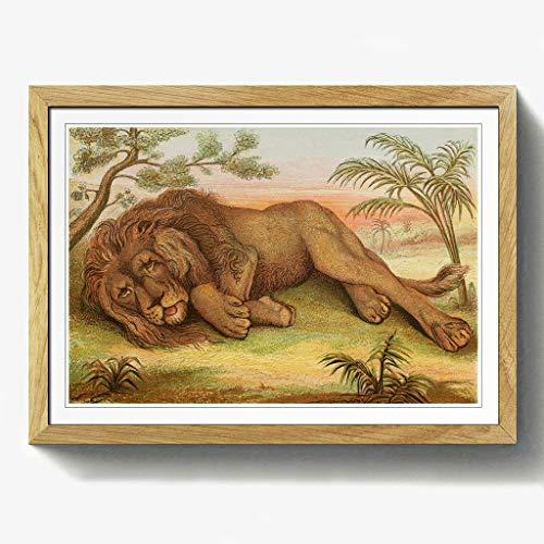 BIG Box Art Vintage Natur Geschichte Stecker Afrikanischer Löwe Walnuss Gerahmter Druck, Mehrfarbig, 24,5x 18/62x 45cm/a2-p, Holz, Eiche, 24.5 x 18-Inch/62 x 45 cm/A2 - Afrikanische Walnuss