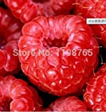 100% de alta calidad de la semilla de frambuesa 100 piezas grande estupendo frambuesa macetas Semillas de flor fruta fresa bonsai Blackberry
