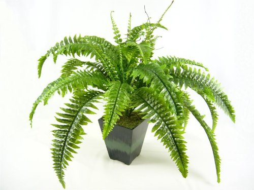 55 cm großer Topf Boston Farn künstlich, Kunstpflanze, Haus Pflanzen