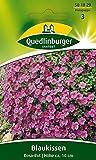 Blaukissen Rosa-rot von Quedlinburger Saatgut