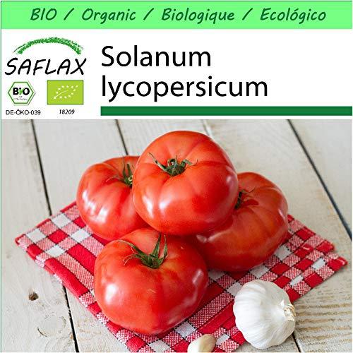 SAFLAX - Jardin dans la boîte - BIO - Tomate - Saint-Pierre - 15 graines - Avec pot en argile, support, substrat de culture et engrais - Solanum lycopersicum