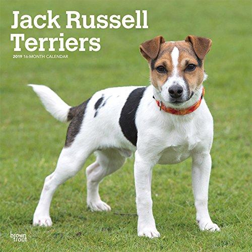 Jack Russell Terriers International 2019 - 18-Monatskalender mit freier DogDays-App: Original BrownTrout-Kalender [Mehrsprachig] [Kalender]
