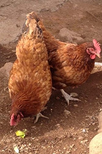 Chickens on the Ground: Blank 150 page lined journal for your thoughts, ideas, and inspiration