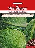 Butterkohl Goldvital, Brassica oleracea