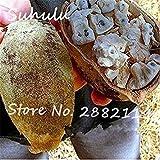 FERRY Semillas de Alto Crecimiento Solo no Las Plantas: Semillas Cushy-10 Semillas/Bolsa importada Baobab (Onia digitata) Seed s Outerdoor Semillas Bonsai Semillas orgánicas Crecen rápido 5