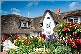 Poster 30 x 20 cm: Amrum - Friesenhaus mit Blumengarten von