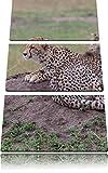 magnifico ghepardo immagine di pietra 3 pezzi picture tela 120x80 su su tela, XXL enormi immagini completamente Pagina con la barella, stampe d'arte sul murale cornice gänstiger come la pittura o un dipinto ad olio, non un manifesto o un baner