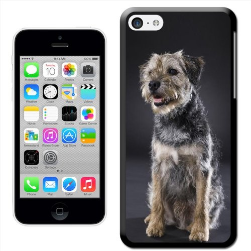 Chien–Border Terrier Coque arrière rigide pour Apple iPhone modèles, plastique, Border Terrier Dog Sitting, iPhone 5C Border Terrier Dog Sitting