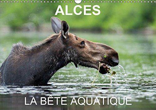 ALCES - LA BETE AQUATIQUE 2019: 13 photos d'orignaux dans leur milieu aquatique, au Quebec