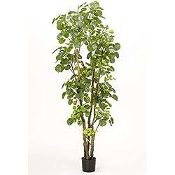 artplants Set 2 x Kunst Polyscia FILARO, 590 Blätter, grün-Creme, 195 cm - Künstliche Zimmerpflanzen/Deko Pflanzen