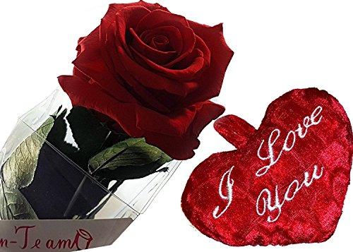 Rosen-te-amo Valentinstagsgeschenk - Konservierte Blume (Haltbare Rose) mit Herz und Valentinstag Grußkarte - Konservierte Rose 3 Jahre haltbar OHNE WASSER - Geschenk-Set mit rote Rose Valentinstag Geschenk (Frauen-herz-tag)