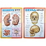 Part-2 Human Physiology 3D Embossed Charts [Set of 10] Specially for Biological students & Doctors @ Cheapest rates [ Size 43cm long x 31cm wide on P.V.C.]