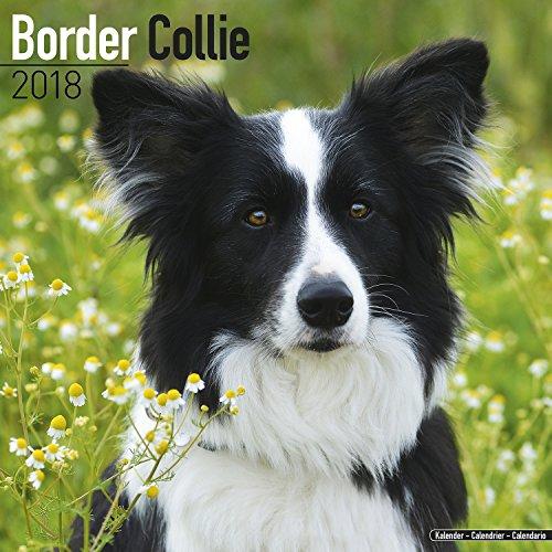 Border Collie (Square)