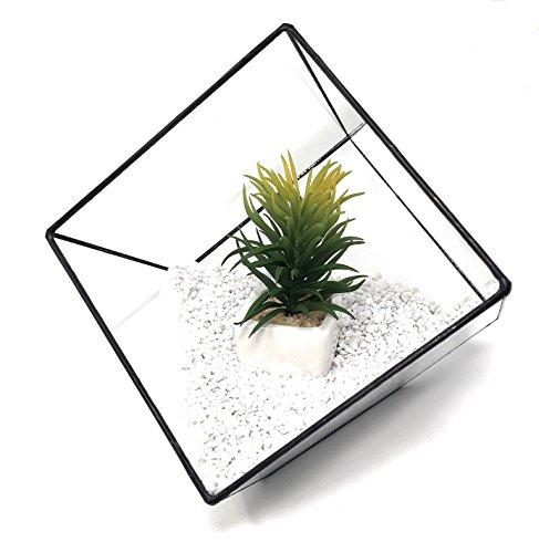 Ultra 15x15x15cm Premium Qualität Glasterrarium Würfel Pflanzer mit einem abgeschnittenen Rand perfekt für Moos und Pflanzen Tabletop Display handgemachte künstlerische Halter Herzstück Indoor-Dekorationen (15x15x15)