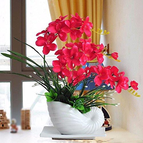 Schmetterlingsorchidee Größe