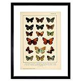 The Art Stop Painting Insect Deuchert Moths Butterfly Plate 4 Variety Framed Art Print