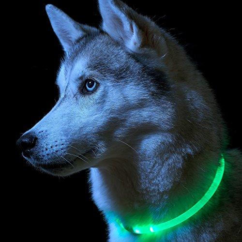 Auraglow Superhelles Leuchtendes LED Hundehalsband Hohe Sicherheit Blinkende Sicherheitsleine