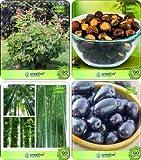 Pinkdose Baumsamen Pflanze Caesalpinia Sappan, Sapindus emarginatus, Klein Bambus, Syzygium Cumini Combo Für HomPinkdose Sha