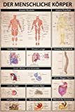 1art1 99531 Der Menschliche Körper - Anatomie, Muskeln Knochen Organe XXL Poster 120 x 80 cm