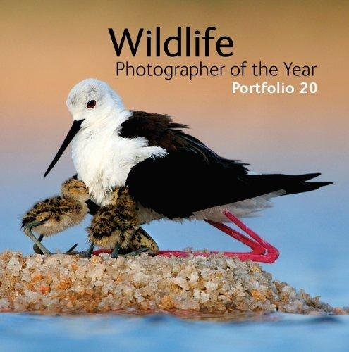 Wildlife Photographer of the Year: Portfolio 20 by Rosamund Kidman Cox ( 2010 ) Hardcover