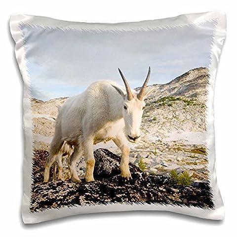 USA, Washington, Cascade Range, Upper Enchantments, Mountain Goat Ewe-Pillow Case, 16 by 16