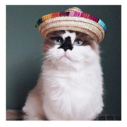 n Hund Katze Stroh Sombrero Top Hat Pet Verstellbare Schnalle Kostüm für Kleine Tiere Party Fiesta Supplies (Kegel Halloween Kostüme)