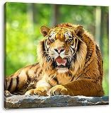 Majestätischer Tiger auf einem Stein, Format: 40x40 auf Leinwand, XXL riesige Bilder fertig gerahmt mit Keilrahmen, Kunstdruck auf Wandbild mit Rahmen, günstiger als Gemälde oder Ölbild, kein Poster oder Plakat