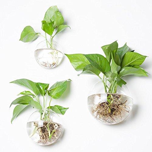 Newdreamworld, set di 3formati misti bubble terrariums, da parete per interni in vetro vaso, acquario, parete terrari muschio, succulente vaso, parete air plant holder