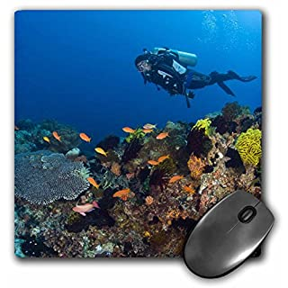 3dRose mp_74813_1 8 x 8-Inch Scuba Diving, Apo Island, Philippines-As29 Sws0139 - Stuart Westmorland Mouse Pad