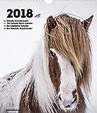 Islandpferd Kalender 2018