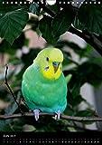 Wilde Wellensittiche (Wandkalender 2017 DIN A4 hoch): Wunderschöner Wellensittichkalender mit atemberaubend schönen und farbenprächtigen Fotografien … (Monatskalender, 14 Seiten ) (CALVENDO Tiere) - 7