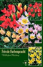 Dobbe Frühjahrsblüher Blumenzwiebeln Sortiment