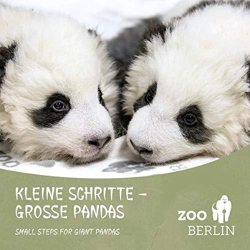 Kleine Schritte - Große Pandas: Die Panda-Zwillinge aus dem Zoo Berlin