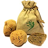 """3 IntimateCare Sea Sponges - 100% Natural Mediterranean Silk Sponge - Unbleached - Natural Tampon Alternative - Super Comfortable - Earth Friendly - Biodegradable"""