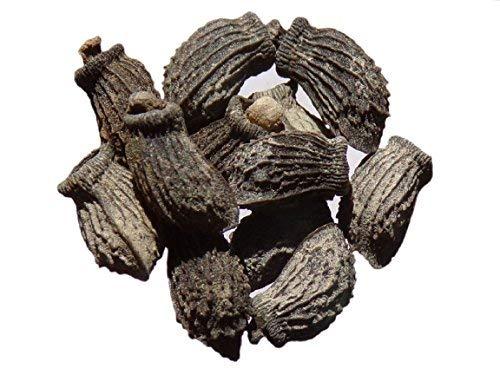 Bourrache Officinale - 3 grammes - Borago Officinalis - Borage - (Engrais Vert - Green Manure) - SEM05