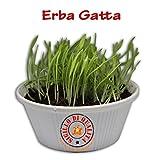 Erba Gatta pronta per l'uso 300 gr