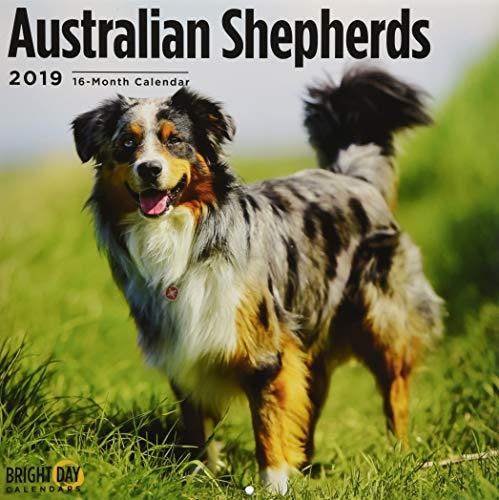 Australian Shepherds 2019 (BREEDS)